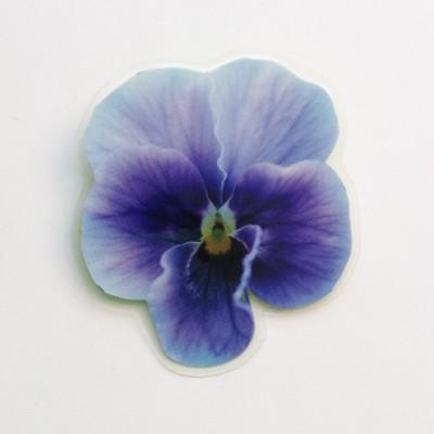 brooch  violet