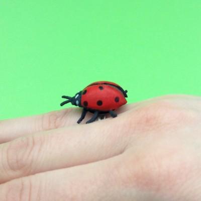 ring ladybird