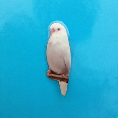 brooch bird white