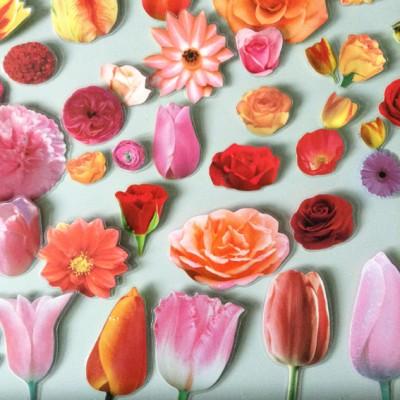 brooch flower pink group 72