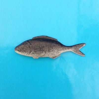 brooch sardine 72