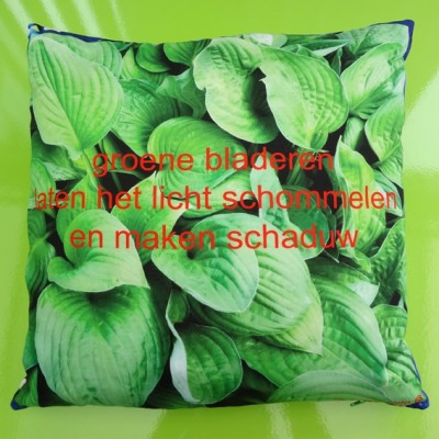 cushion hosta 72 kopie