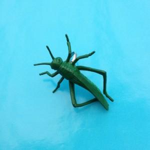ring grasshopper 72