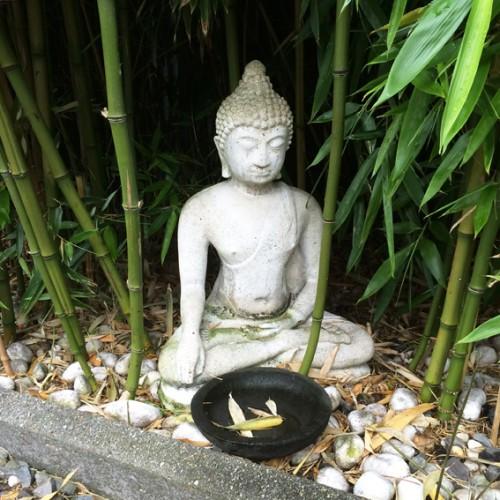 boeddha tuin 1 72